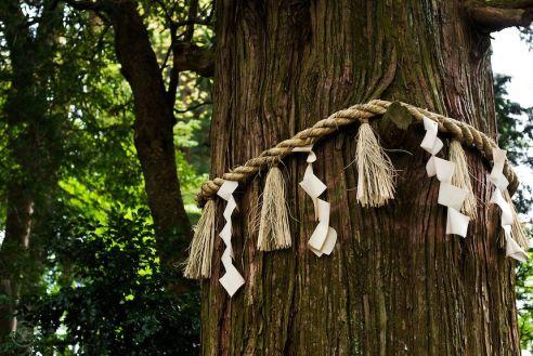 shimenawa árbol